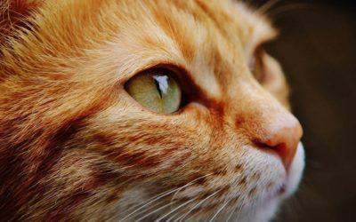 Tierfotografie – Tiere fotografieren als Portrait- oder als Actionfotografie